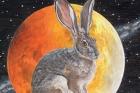 run rabbit runresize